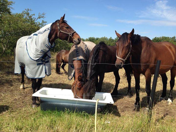 Elektrolytter til hest