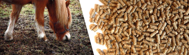 Undgå sandophobning i hestens tarm - giv loppefrøskaller